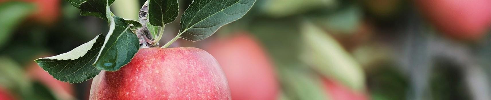 Frutas y Verduras Gelina   Tienda online
